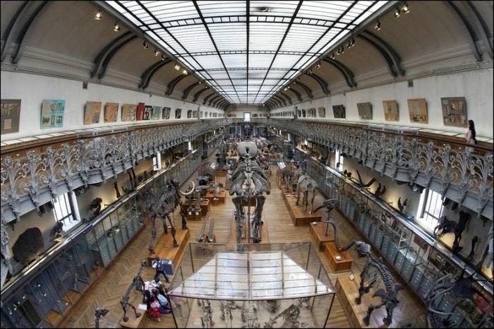 музей естественной истории франция 1 (700x466, 219Kb)