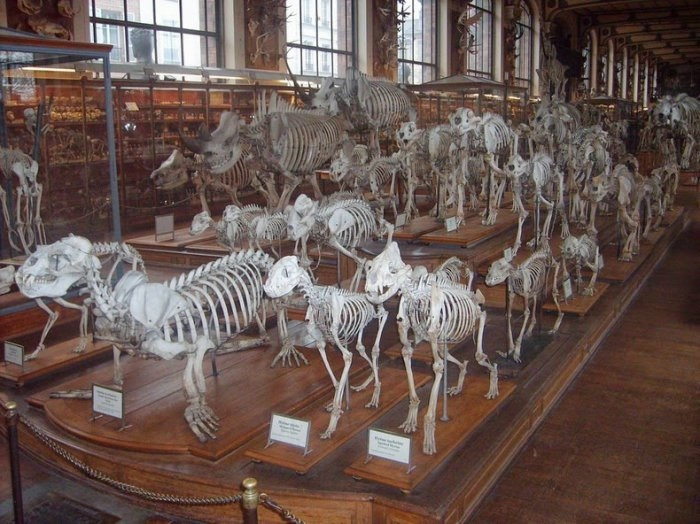 музей естественной истории франция 3 (700x524, 213Kb)