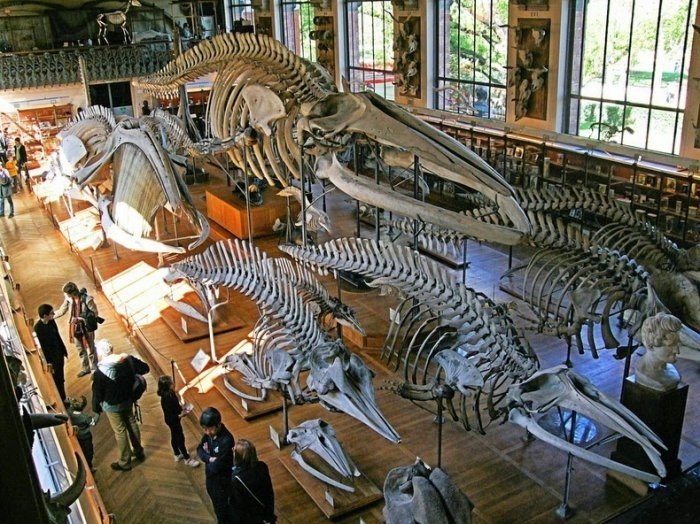 музей естественной истории франция 5 (700x524, 284Kb)