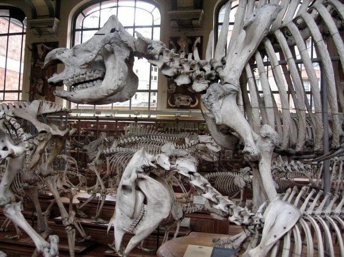 музей естественной истории франция 7 (700x524, 238Kb)