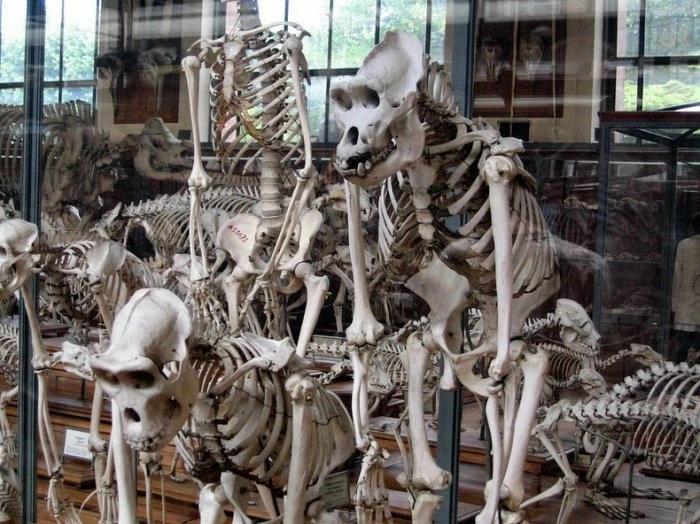 музей естественной истории франция 9 (700x524, 238Kb)