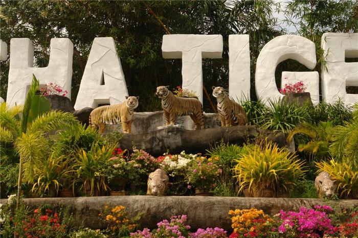 тигровый зоопарк в таиланде фото 2 (700x466, 481Kb)