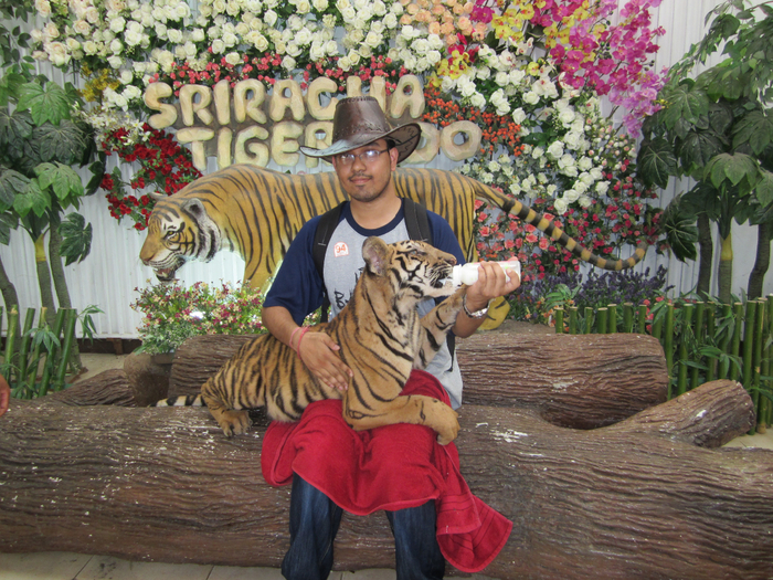 тигровый зоопарк в таиланде фото 4 (700x525, 597Kb)