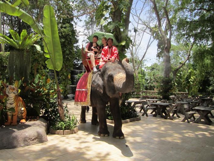 тигровый зоопарк в таиланде фото 5 (700x525, 478Kb)