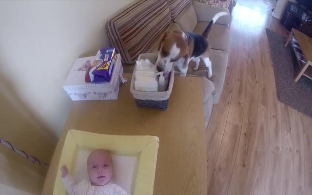 4208855_bestdog (640x400, 27Kb)