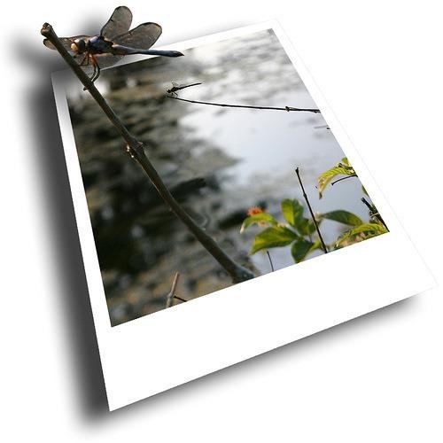clip_image017[16]