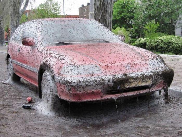 Кошмар, который может случиться с вашей машиной (5 фото)