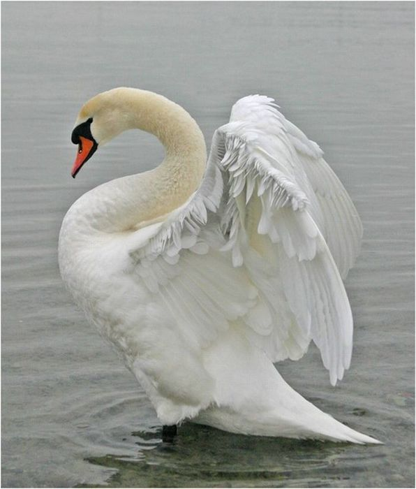 белый птах видео