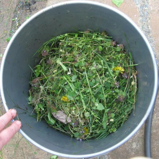 Куда девать сорняки, как из сорняков сделать удобрение, жидкая подкормка из сорняков,/4682845_ (520x521, 94Kb)