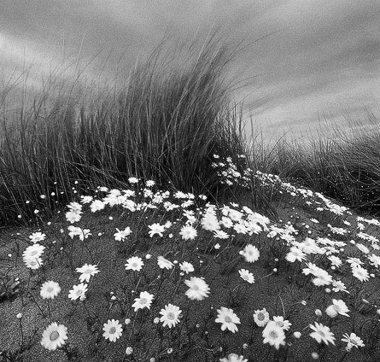 Чип Форелли, мастер черно белой фотографии