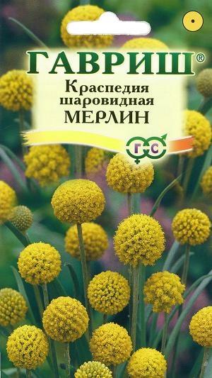 9813_kraspedia_merlin (300x533, 108Kb)