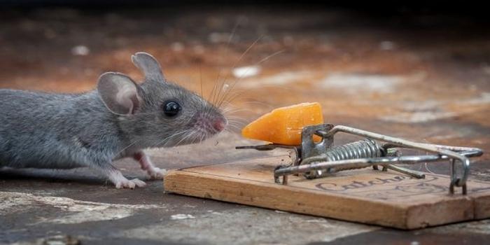 мышь фото 1 (700x350, 143Kb)