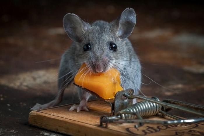 мышь фото 5 (700x466, 175Kb)