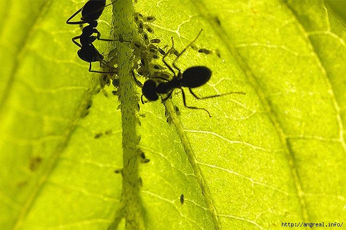 10 народных советов избавления от муравьёв на садовом участке