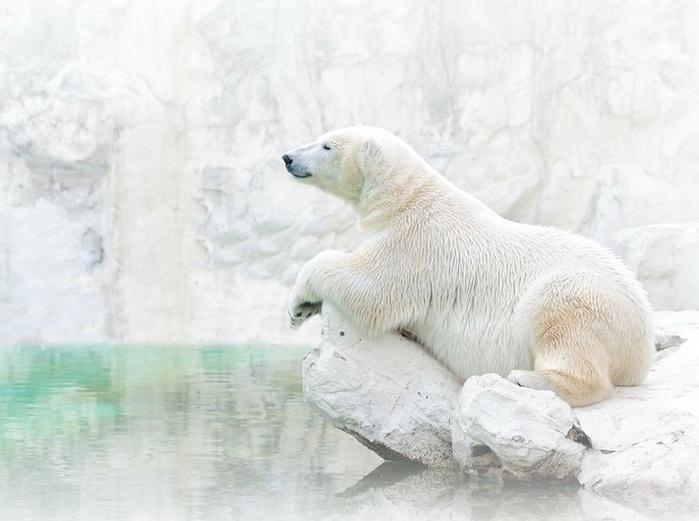 б.медв. (700x521, 97Kb)