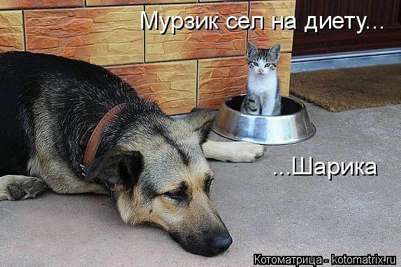 kotomatritsa__C (574x383, 146Kb)