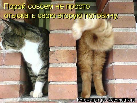kotomatritsa_6C (480x360, 97Kb)