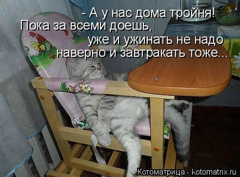 kotomatritsa_b4 (492x364, 96Kb)