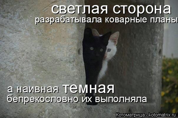 kotomatritsa_G (604x400, 112Kb)