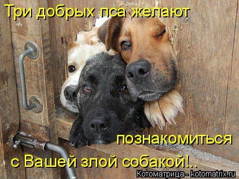 kotomatritsa_JA (492x369, 141Kb)