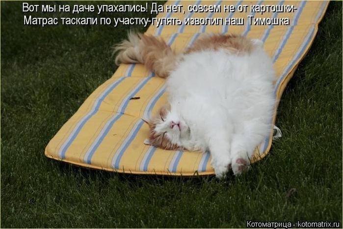 kotomatritsa_o1 (700x466, 242Kb)