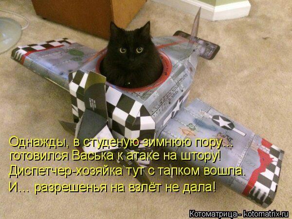kotomatritsa_oa (600x450, 164Kb)