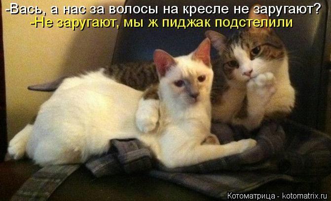 kotomatritsa_p (671x407, 126Kb)