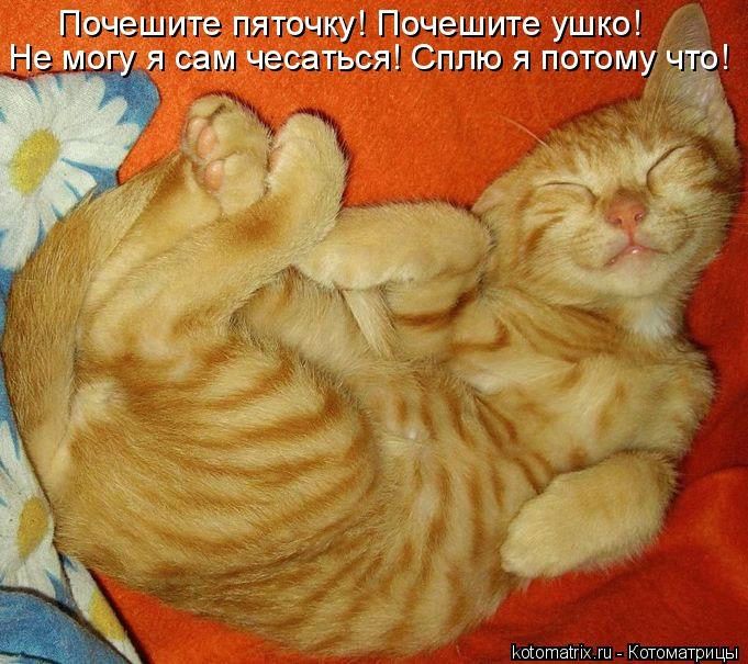 kotomatritsa_U (681x605, 228Kb)