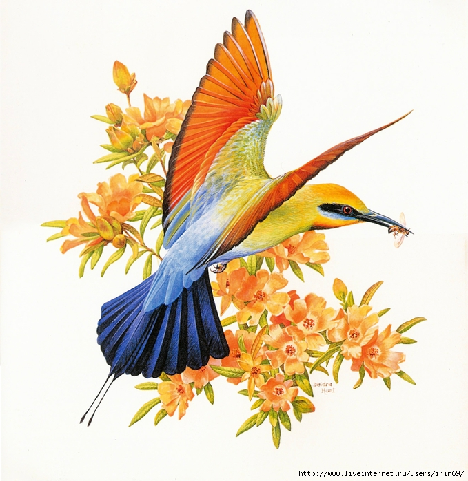 MS-4th_Beautiful_Australian_Birds_2004_002_January1 (679x700, 321Kb)