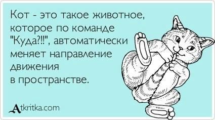 3821971_kot87 (425x237, 99Kb)