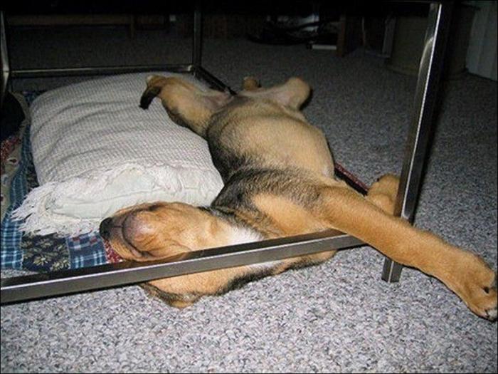 1401394556_dog-sleeping-010 (700x525, 361Kb)