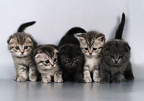 Котята (566x400, 84Kb)
