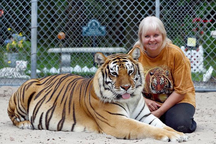 домашние тигры фото 1 (700x465, 458Kb)