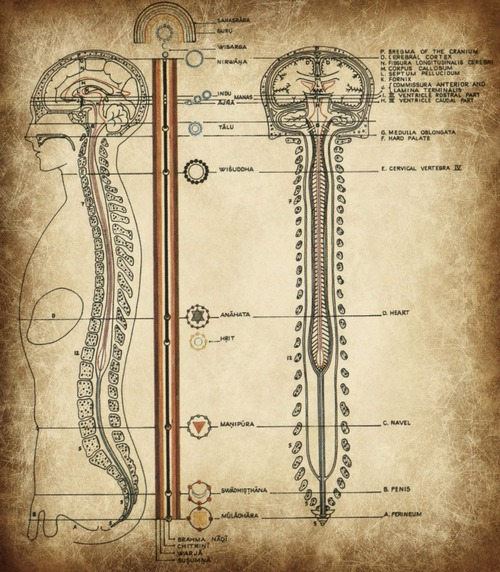 jacobs ladder spinal cord
