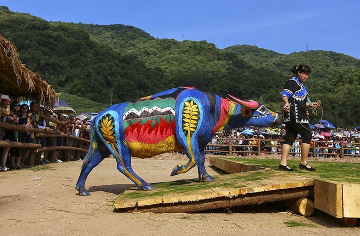 buffalo-bodypainting-1 (700x460, 159Kb)