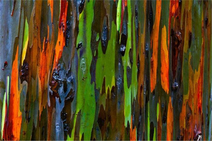 Ствол деревьев раскраска