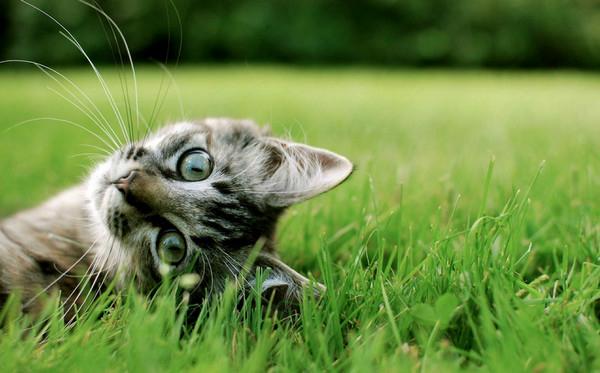 трава и кошки30 (600x373, 200Kb)