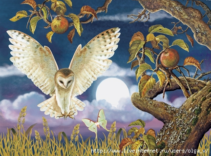 Barn Owl In The Apple Orchard72 (432x320, 162Kb)