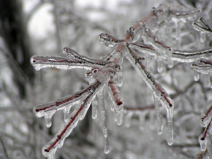 10229110-R3L8T8D-1000-Ice_Storm_Kansas (700x525, 388Kb)
