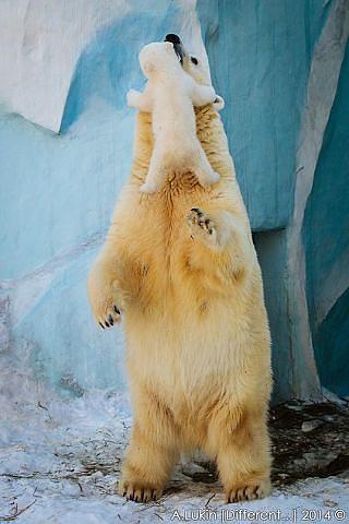 Мама мне просто захотелось тебя обнять  Новосибирский зоопарк (320x480, 101Kb)