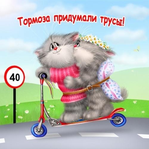 4497417_1316922948_www_nevsepic_com_ua_kosharikinasamokate12 (500x500, 162Kb)