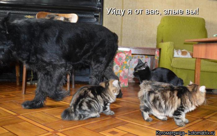 3821971_kotomatritsa_wL (700x440, 50Kb)