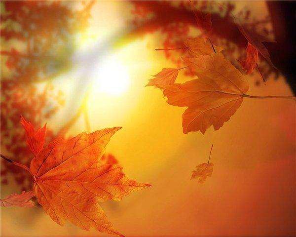 autumn003 (600x480, 34Kb)