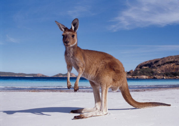 3937404_Australia1 (600x423, 42Kb)