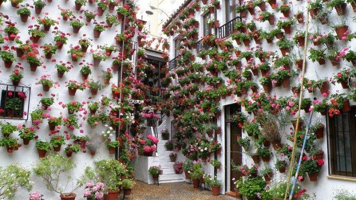 фестиваль цветов в кордове 5 (700x393, 390Kb)