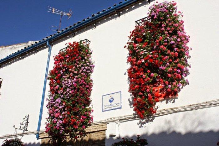 фестиваль цветов в кордове 9 (700x466, 320Kb)