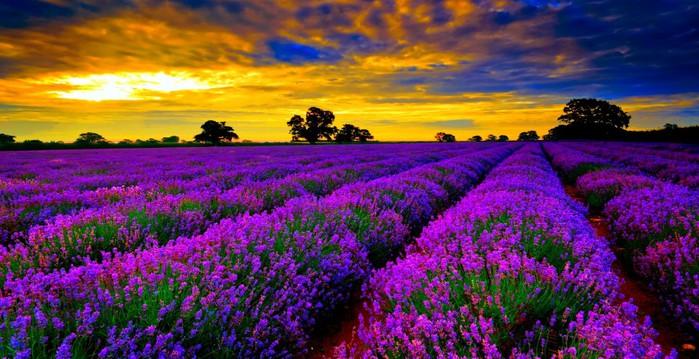 Lavender-Fields-sky-www.tourismprofile.com--973x500 (700x359, 107Kb)