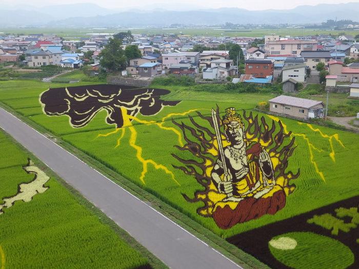 картины на рисовых полях японии 2 (700x525, 388Kb)