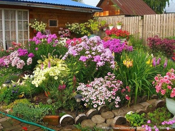 многолетние цветы (604x453, 296Kb)