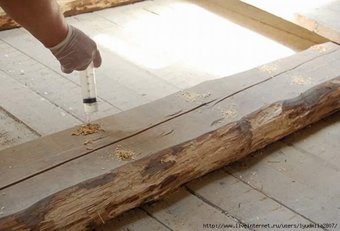 Как избавится от жука короеда